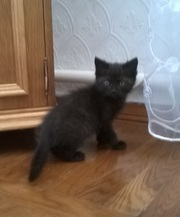 Отдам в хорошие руки прекрасного черного котенка!